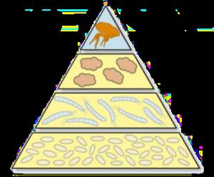 piramide de la pulga