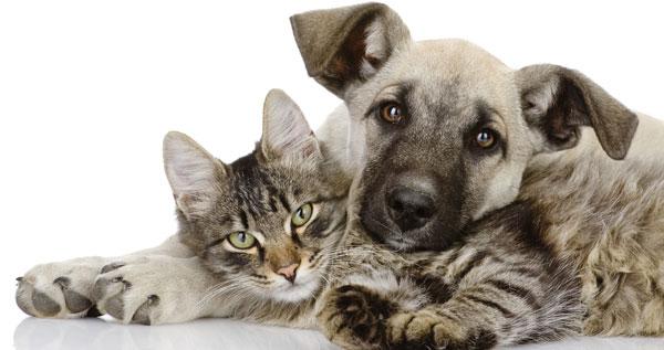 esterilizacion en perros y gatos